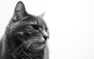 Как распознать у ребенка аллергию на кошек и справиться с болезнью