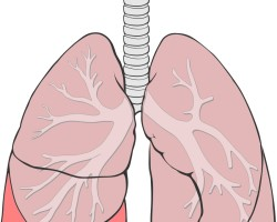 Признаки пневмонии у ребенка: как распознать опасность