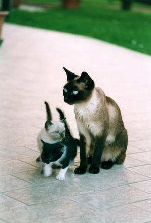 Не аллергенные кошки